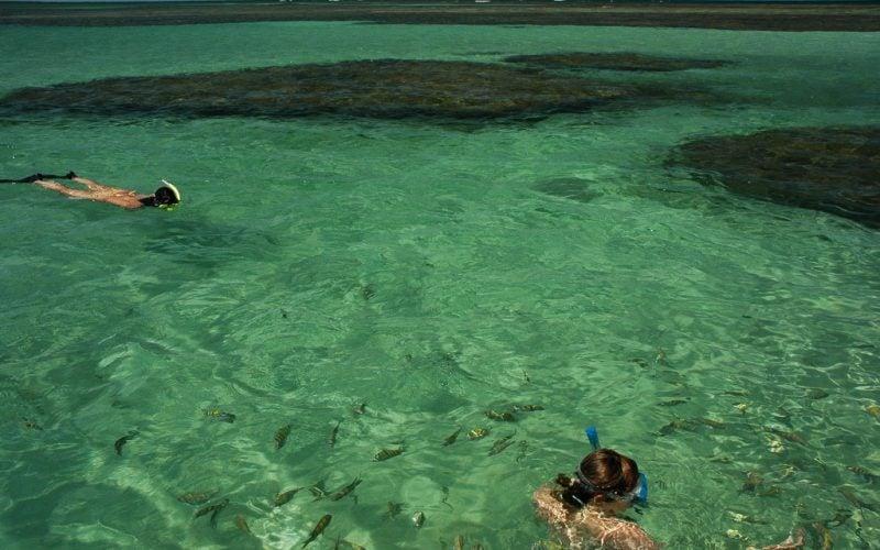 snorkelling w fish